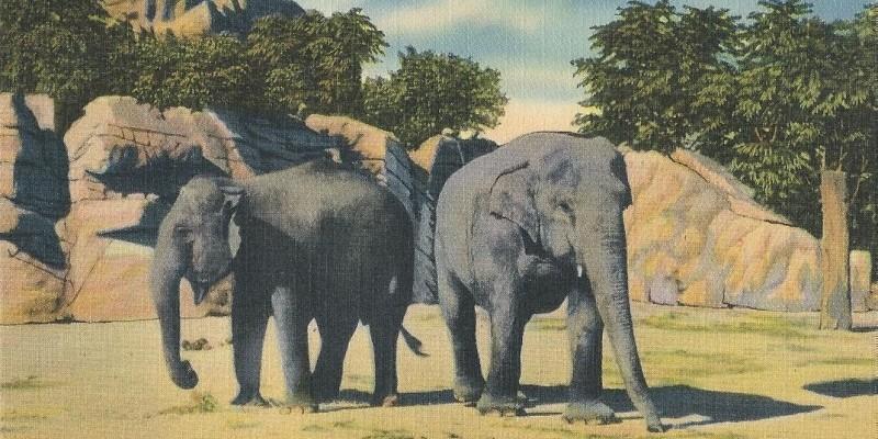 elephant-detroit-zoo